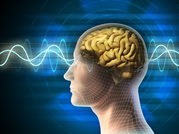 brain waves and nervous system activity